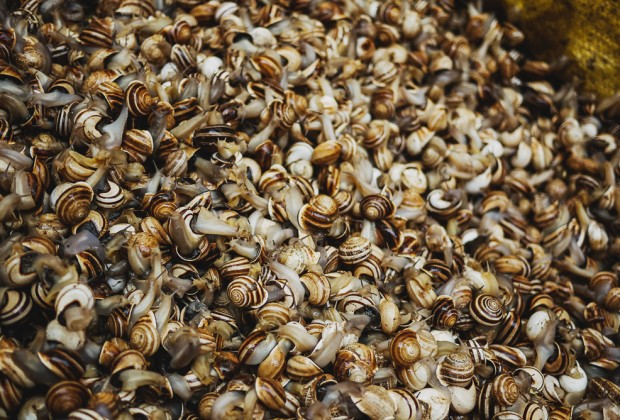Snails For Sale Fes Old Souk