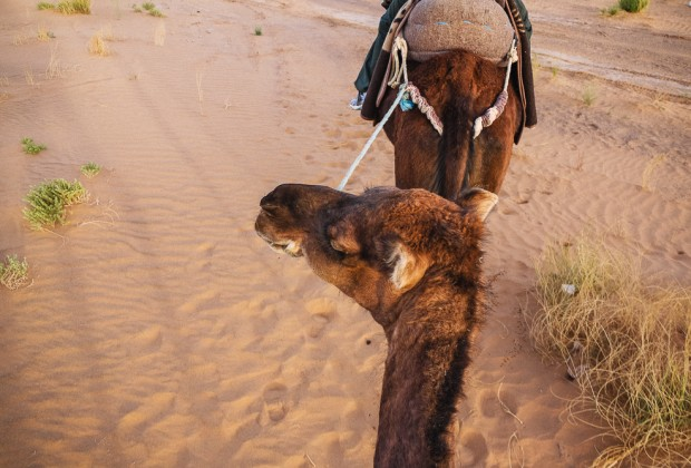 Camel Ride Through Merzouga Desert Sand Dunes